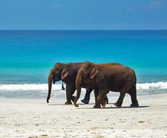 Andaman Holiday